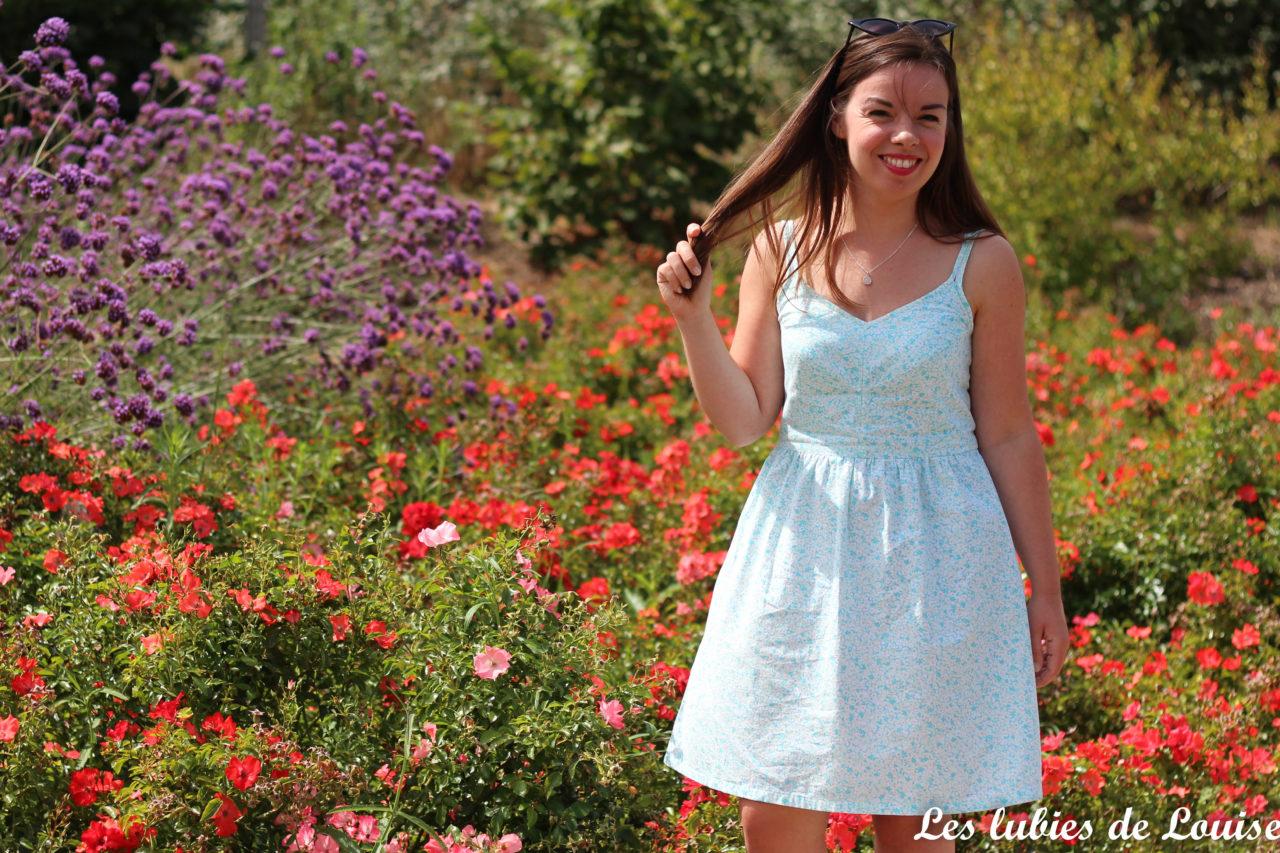 Centaurée en fleurs
